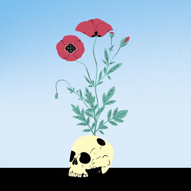 Crâne aux coquelicots ©Vincent Bergier